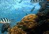 Das liberianische Register, die nordamerikanische Meeresumweltschutz-Vereinigung (NAMEPA), ProSea Marine Education und Maritime Training Services (MTS) aus haben bei ihrem gemeinsamen Ausbildungsprogramdie Umwelt im Blick